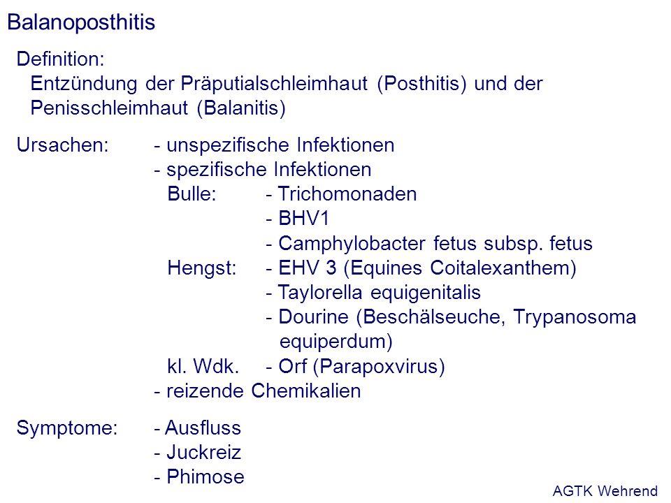Balanoposthitis Definition: Entzündung der Präputialschleimhaut (Posthitis) und der Penisschleimhaut (Balanitis) Ursachen:- unspezifische Infektionen