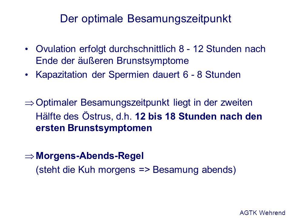 Der optimale Besamungszeitpunkt Ovulation erfolgt durchschnittlich 8 - 12 Stunden nach Ende der äußeren Brunstsymptome Kapazitation der Spermien dauer