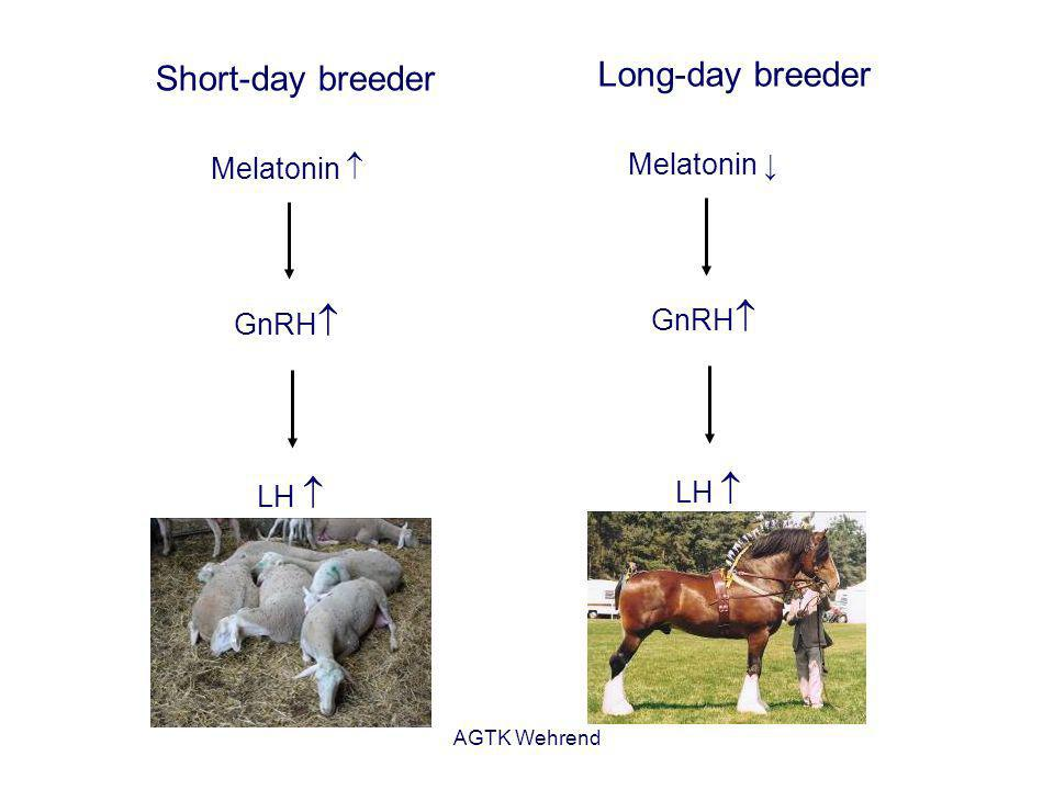 AGTK Wehrend Melatonin GnRH LH Short-day breeder Melatonin GnRH LH Long-day breeder