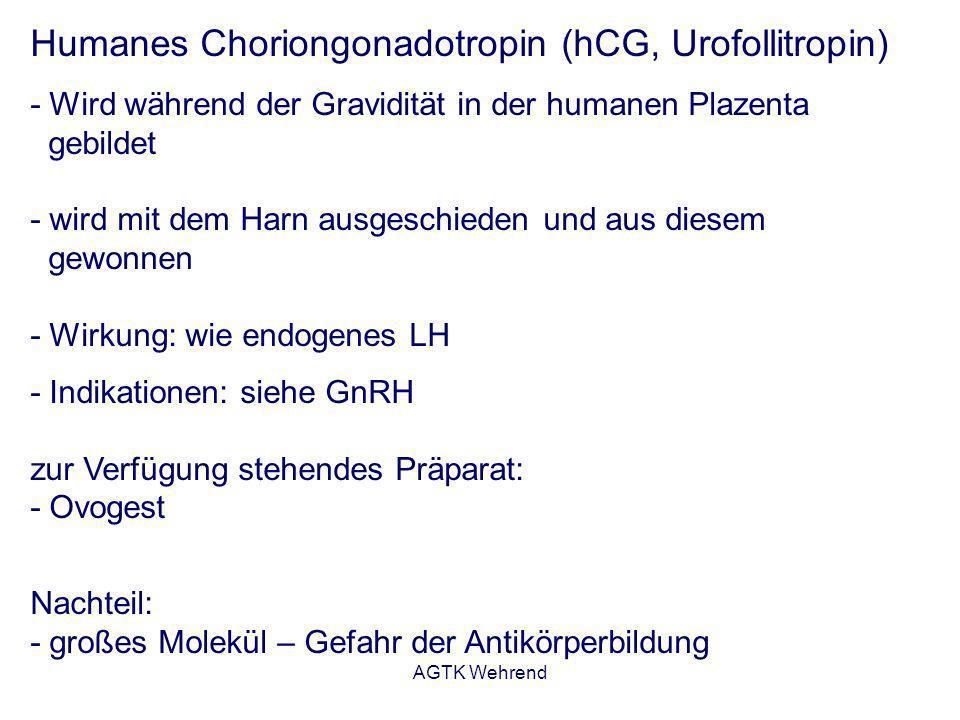 AGTK Wehrend Humanes Choriongonadotropin (hCG, Urofollitropin) - Wird während der Gravidität in der humanen Plazenta gebildet - wird mit dem Harn ausg