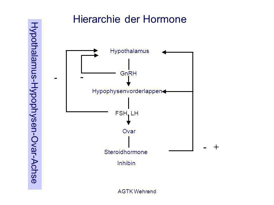 AGTK Wehrend Hypothalamus Hypophysenvorderlappen Ovar FSH, LH GnRH Steroidhormone Inhibin - - -+ Hierarchie der Hormone Hypothalamus-Hypophysen-Ovar-A