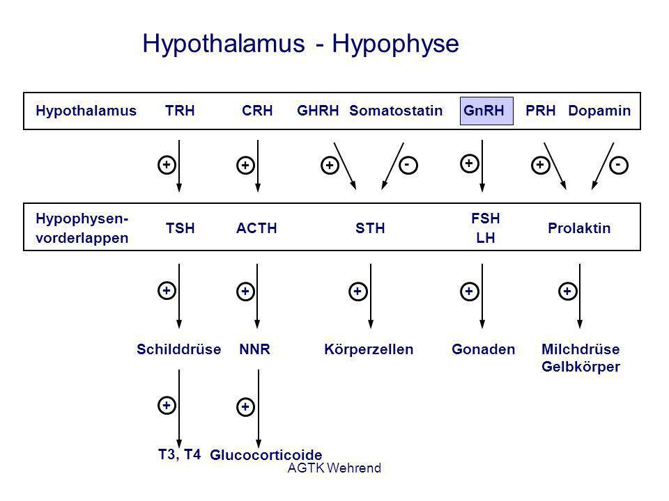 AGTK Wehrend Gonadotropin-Releasing-Hormon (GnRH) - Dekapeptid - Synthese und Speicherung im Hypothalamus - verschiedene Analoga im Handel - Wirkung: Freisetzung von LH und FSH - Finale gemeinsame Signalsubstanz des Gehirnes, die das Reproduktionsgeschehen reguliert (Fernald und White, 1999).