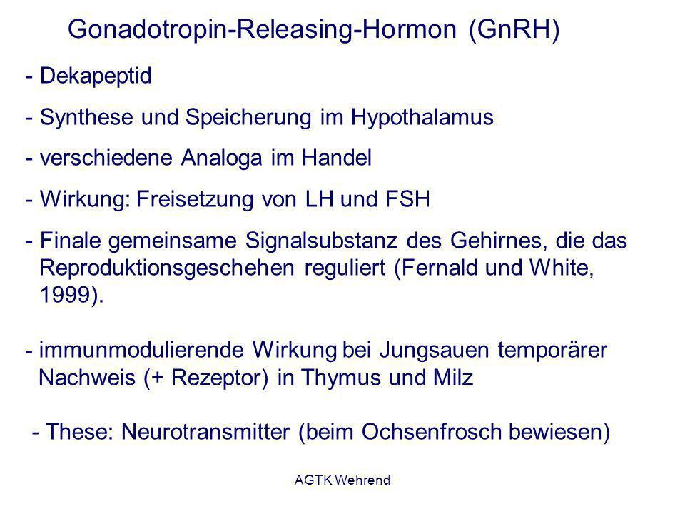 AGTK Wehrend GnRH - Neuropeptid, Dekapetid - Viele Tiere besitzen zwei oder mehr GnRH-Formen Bezeichnung Vorkommen l-GnRH-1Neunauge (lamprey) l-GnRH-3Neunauge (lamprey) t-GnRH-1Manteltier (tunicate) t-GnRH-2Manteltier (tunicate) t-GnRH-3Manteltier (tunicate) t-GnRH-4Manteltier (tunicate) t-GnRH-5Manteltier (tunicate) t-GnRH-6Manteltier (tunicate) t-GnRH-7Manteltier (tunicate) t-GnRH-8Manteltier (tunicate) t-GnRH-9Manteltier (tunicate) Bezeichnung Vorkommen pj-GnRHPejerreyfisch (pejerrey) hr-GnRHHering (herring) cf-GnRHWels (catfish) df-GnRHDornhai (dogfish) c-GnRH-1Huhn (chicken) c-GnRH-2Huhn (chicken) s-GnRHLachs (salmon) r-GnRHAmphibien (amphibia) sb-GnRHMeerbrase (seabream) m-GnRHSäugetier (mammalia) gp-GnRHMeerschweinchen (guinea pig) Verschiedene Isoformen bei einem Lebewesen: Mensch: m-GnRH, s-GnRH, df-GnRH einige Manteltiere: sechs verschiedene Isoformen
