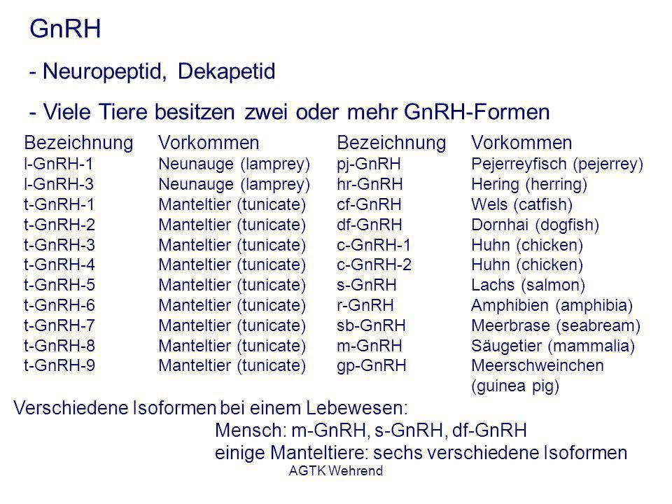 AGTK Wehrend GnRH - Neuropeptid, Dekapetid - Viele Tiere besitzen zwei oder mehr GnRH-Formen Bezeichnung Vorkommen l-GnRH-1Neunauge (lamprey) l-GnRH-3