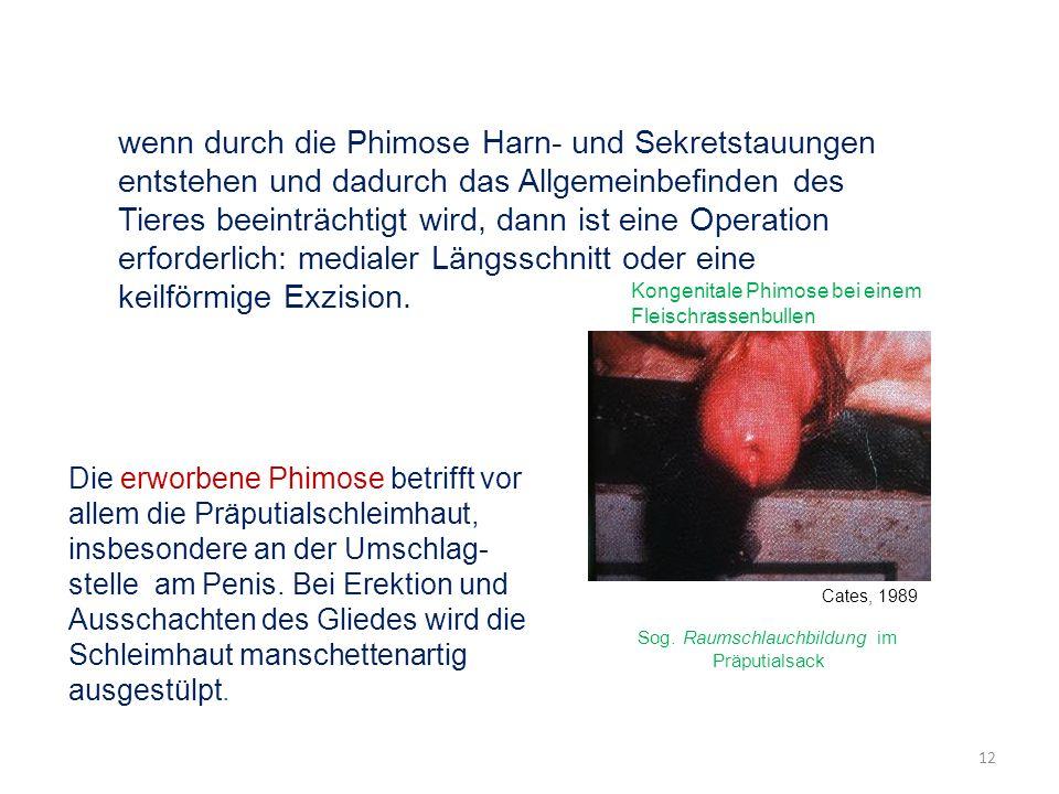 wenn durch die Phimose Harn- und Sekretstauungen entstehen und dadurch das Allgemeinbefinden des Tieres beeinträchtigt wird, dann ist eine Operation e