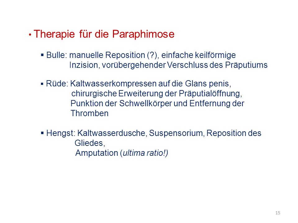 Therapie für die Paraphimose Bulle: manuelle Reposition (?), einfache keilförmige Inzision, vorübergehender Verschluss des Präputiums Rüde: Kaltwasser