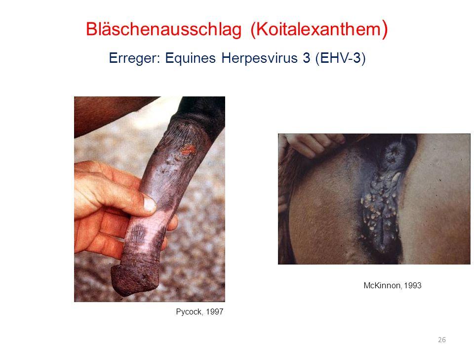 Bläschenausschlag (Koitalexanthem ) Erreger: Equines Herpesvirus 3 (EHV-3) Pycock, 1997 McKinnon, 1993 26