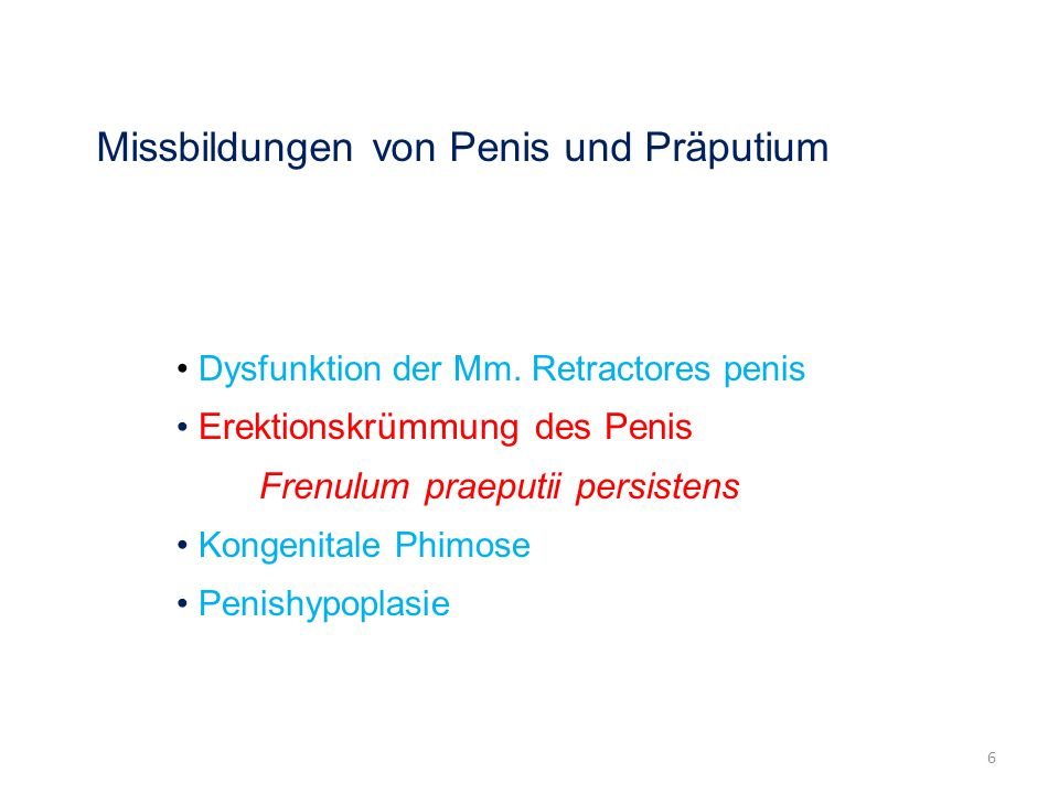 Missbildungen von Penis und Präputium Dysfunktion der Mm. Retractores penis Erektionskrümmung des Penis Frenulum praeputii persistens Kongenitale Phim