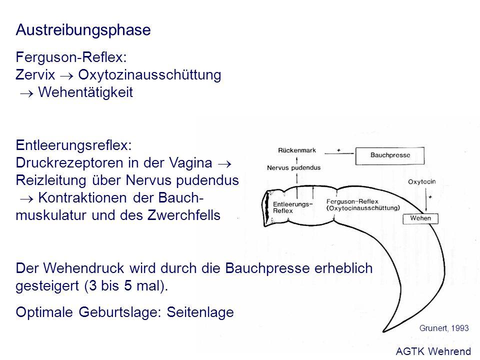 Austreibungsphase Ferguson-Reflex: Zervix Oxytozinausschüttung Wehentätigkeit Entleerungsreflex: Druckrezeptoren in der Vagina Reizleitung über Nervus pudendus Kontraktionen der Bauch- muskulatur und des Zwerchfells Der Wehendruck wird durch die Bauchpresse erheblich gesteigert (3 bis 5 mal).