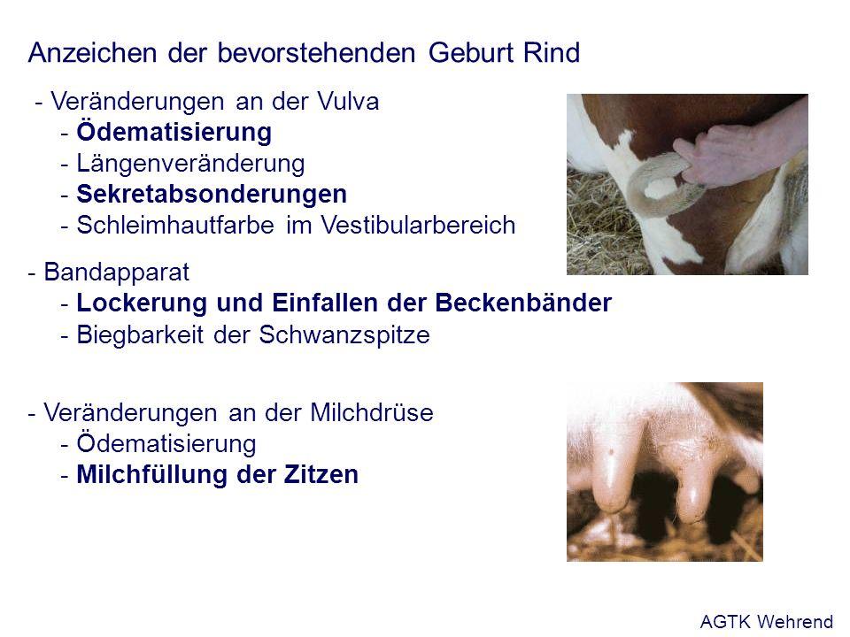 Anzeichen der bevorstehenden Geburt Rind - Veränderungen an der Vulva - Ödematisierung - Längenveränderung - Sekretabsonderungen - Schleimhautfarbe im Vestibularbereich - Bandapparat - Lockerung und Einfallen der Beckenbänder - Biegbarkeit der Schwanzspitze - Veränderungen an der Milchdrüse - Ödematisierung - Milchfüllung der Zitzen AGTK Wehrend