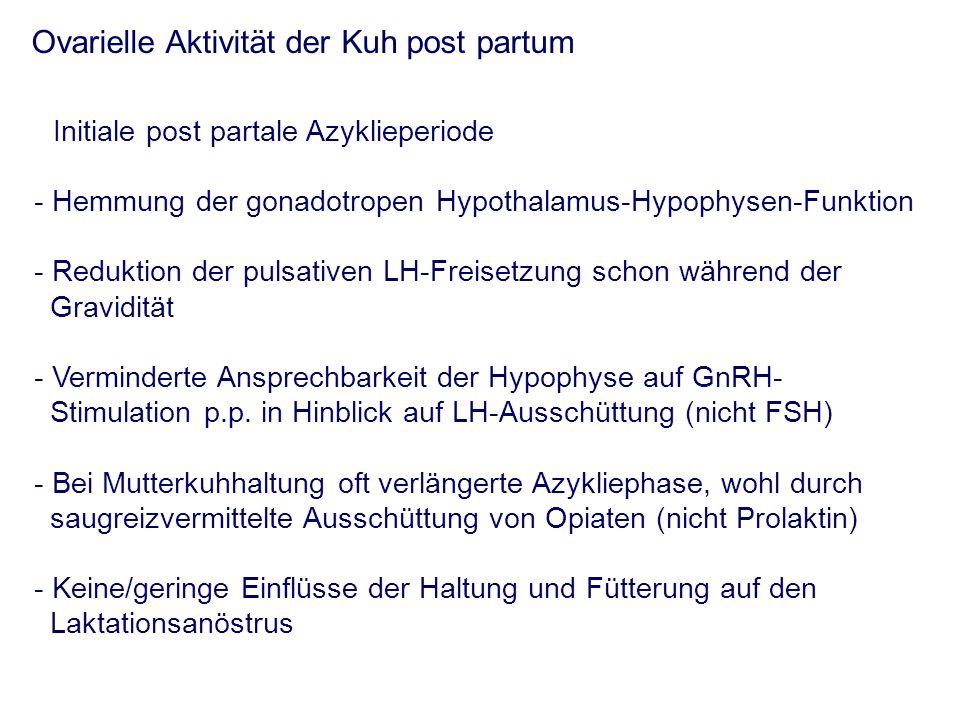 Ovarielle Aktivität der Kuh post partum Initiale post partale Azyklieperiode - Hemmung der gonadotropen Hypothalamus-Hypophysen-Funktion - Reduktion der pulsativen LH-Freisetzung schon während der Gravidität - Verminderte Ansprechbarkeit der Hypophyse auf GnRH- Stimulation p.p.
