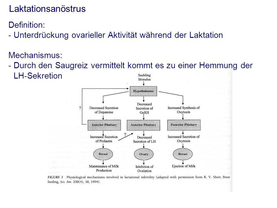 Laktationsanöstrus Definition: - Unterdrückung ovarieller Aktivität während der Laktation Mechanismus: - Durch den Saugreiz vermittelt kommt es zu einer Hemmung der LH-Sekretion