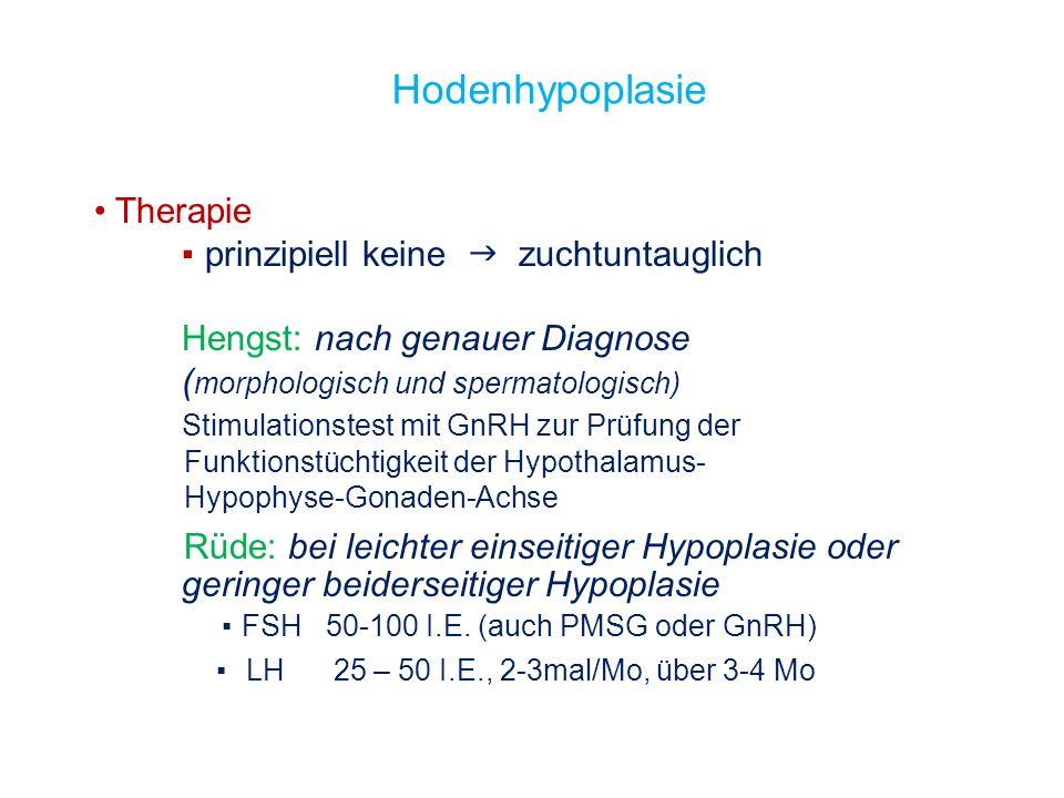 Hodenhypoplasie Therapie prinzipiell keine zuchtuntauglich Hengst: nach genauer Diagnose ( morphologisch und spermatologisch) Stimulationstest mit GnR