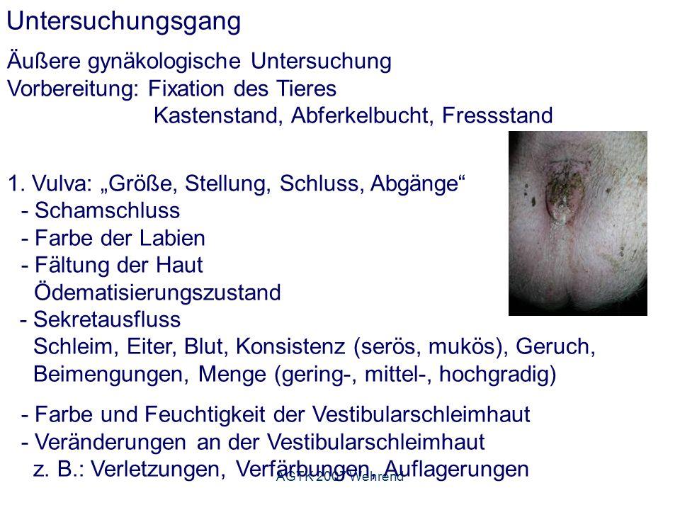 AGTK 2007 Wehrend Untersuchungsgang Äußere gynäkologische Untersuchung Vorbereitung: Fixation des Tieres Kastenstand, Abferkelbucht, Fressstand 1.
