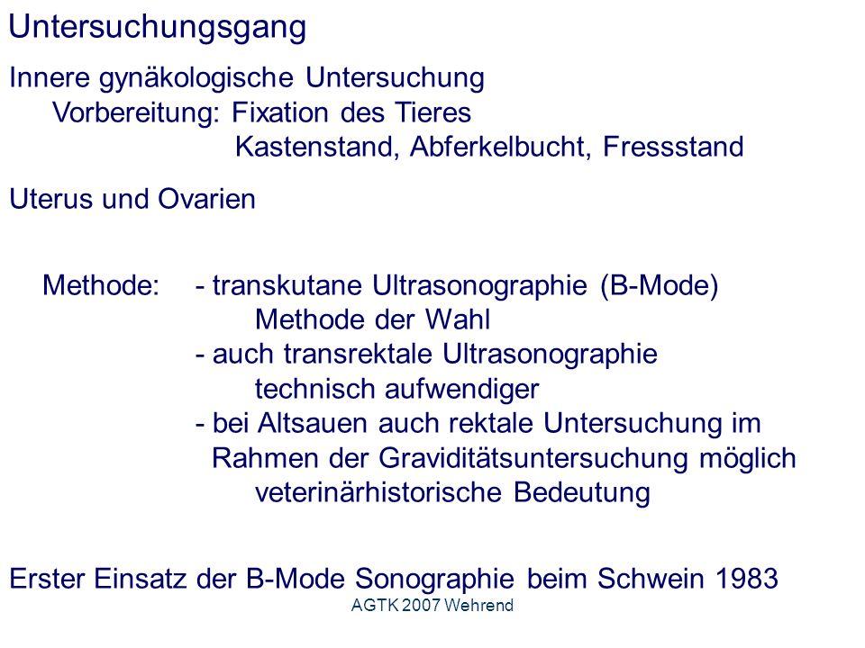 AGTK 2007 Wehrend Untersuchungsgang Innere gynäkologische Untersuchung Vorbereitung: Fixation des Tieres Kastenstand, Abferkelbucht, Fressstand Uterus und Ovarien Methode: - transkutane Ultrasonographie (B-Mode) Methode der Wahl - auch transrektale Ultrasonographie technisch aufwendiger - bei Altsauen auch rektale Untersuchung im Rahmen der Graviditätsuntersuchung möglich veterinärhistorische Bedeutung Erster Einsatz der B-Mode Sonographie beim Schwein 1983