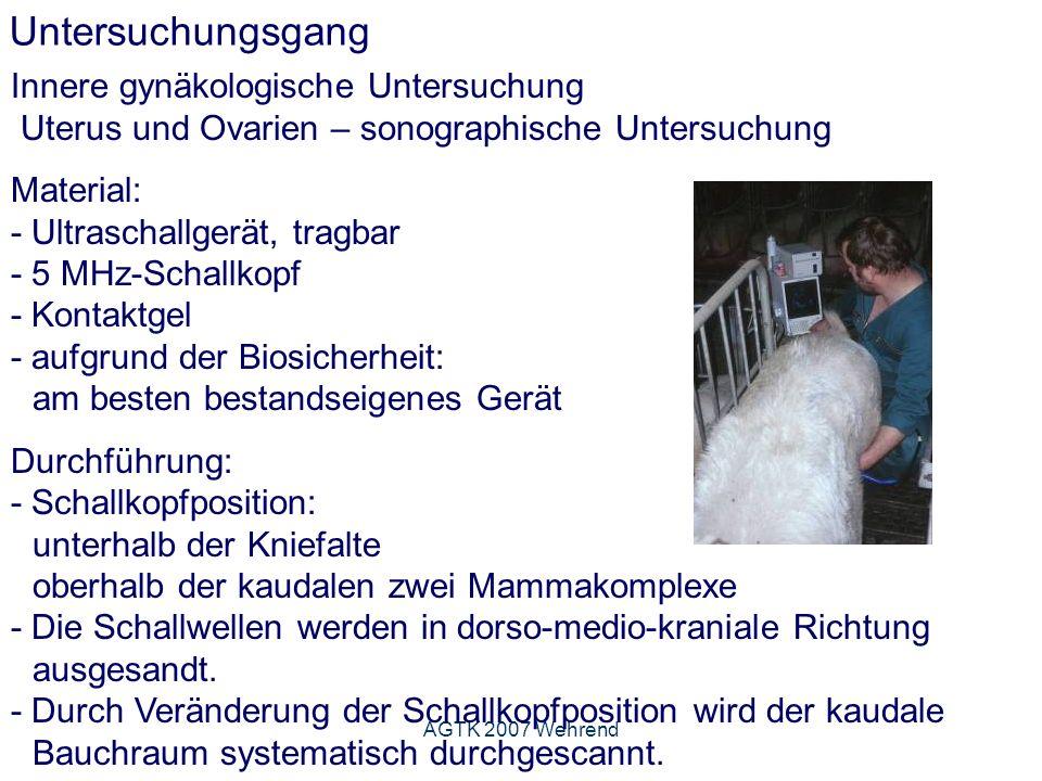 AGTK 2007 Wehrend Untersuchungsgang Innere gynäkologische Untersuchung Uterus und Ovarien – sonographische Untersuchung Material: - Ultraschallgerät, tragbar - 5 MHz-Schallkopf - Kontaktgel - aufgrund der Biosicherheit: am besten bestandseigenes Gerät Durchführung: - Schallkopfposition: unterhalb der Kniefalte oberhalb der kaudalen zwei Mammakomplexe - Die Schallwellen werden in dorso-medio-kraniale Richtung ausgesandt.