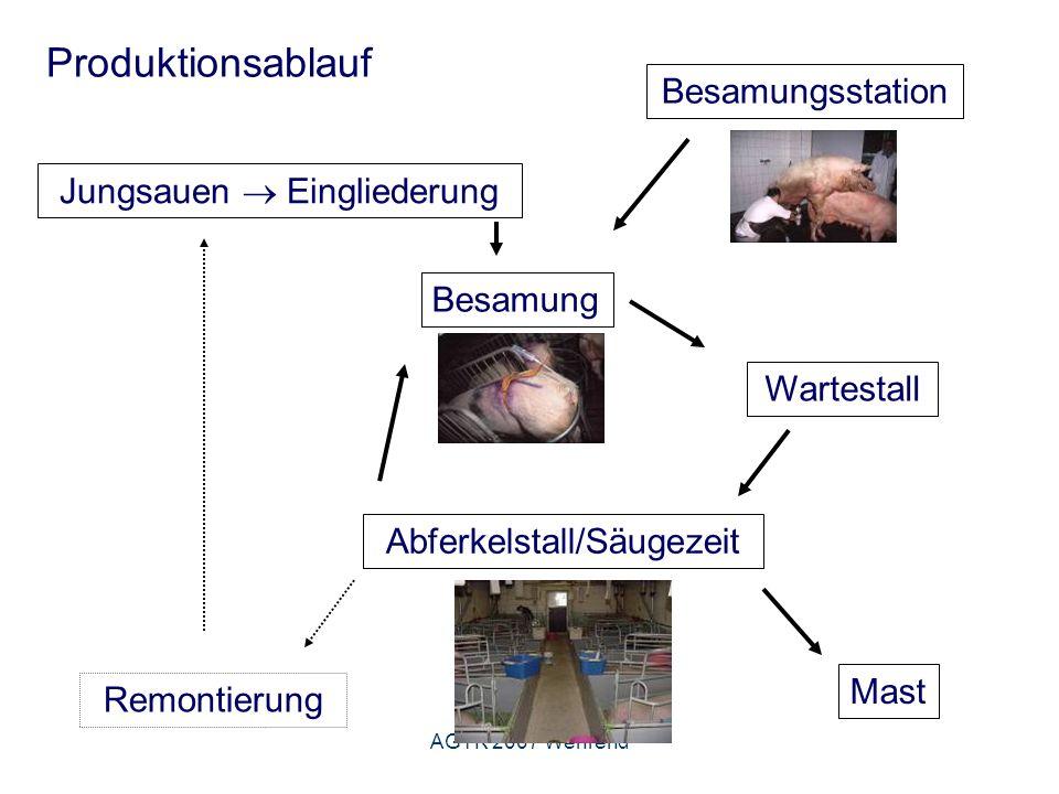 AGTK 2007 Wehrend Untersuchungsgang Äußere gynäkologische Untersuchung Gesäuge häufige pathologische Befunde - Mastitis (Kardinalsymptome der Entzündung) - diffuse und knotige Verhärtungen - Verletzungen (durch Ferkel, durch Stalleinrichtung) - Hypogalaktie/Agalaktie Besondere Bedeutung der Gesäugeuntersuchung: -Selektion von Zuchtläufern (Anzahl der Komplexe und Zitzenform) -Nach dem Absetzen (Gesäugezustand als Selektionskriterium) -Bei mangelndem Wachstum der Ferkel