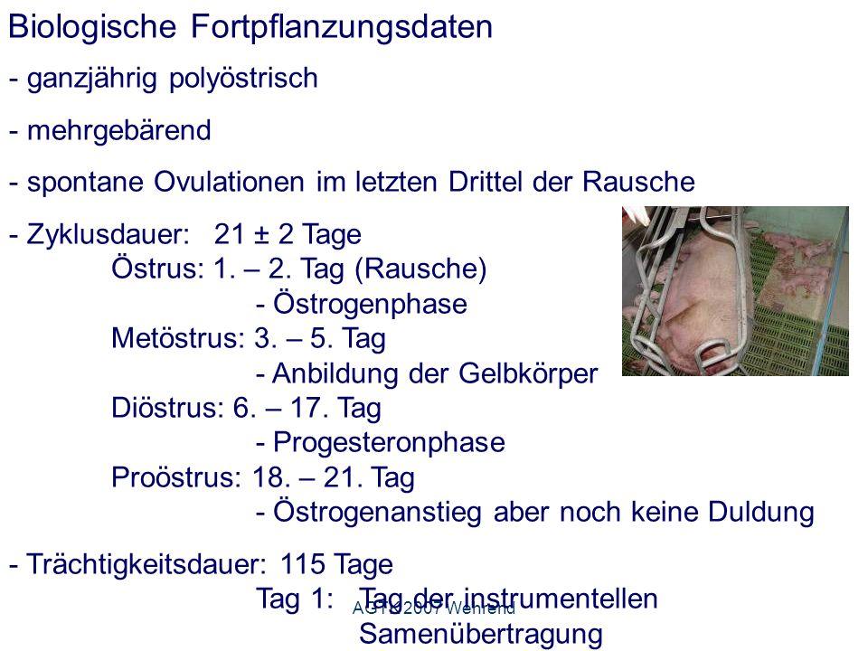AGTK 2007 Wehrend Fruchtbarkeitskennzahlen - Indikatoren der Herdenfruchtbarkeit - dienen der Statusbeschreibung, Überwachung und Produktionszielfestlegung KennzahlZielgrößeGrenzwert Abferkelrate %95 75 insgesamt geborene Ferkel pro Wurf 12,5 10,5 lebend geborene Ferkel pro Wurf 12 10 tot geborene Ferkel pro Wurf 0,4 0,8 Ferkelrate1100 750 Umrauscherquote %5 25 modifiziert nach Schnurrbusch, 2006 Abferkelrate: abgeferkelte Sauen x 100 besamte Sauen in der Regel berechnet auf die Erstbesamungen Ferkelrate: Anzahl lebend geborener Ferkel je 100 Erstbelegungen