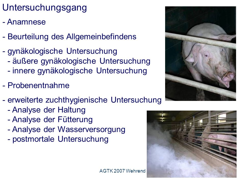 AGTK 2007 Wehrend Untersuchungsgang