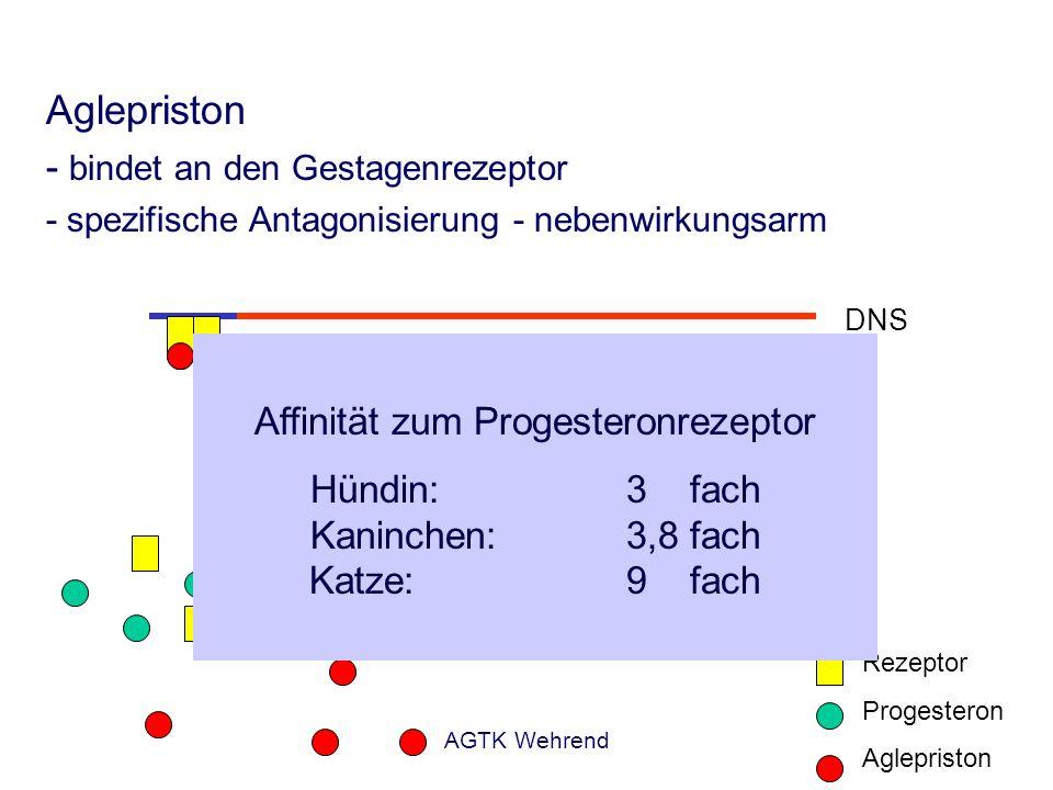 AGTK Wehrend Aglepriston - bindet an den Gestagenrezeptor - spezifische Antagonisierung - nebenwirkungsarm Rezeptor Progesteron Aglepriston DNS Gestag