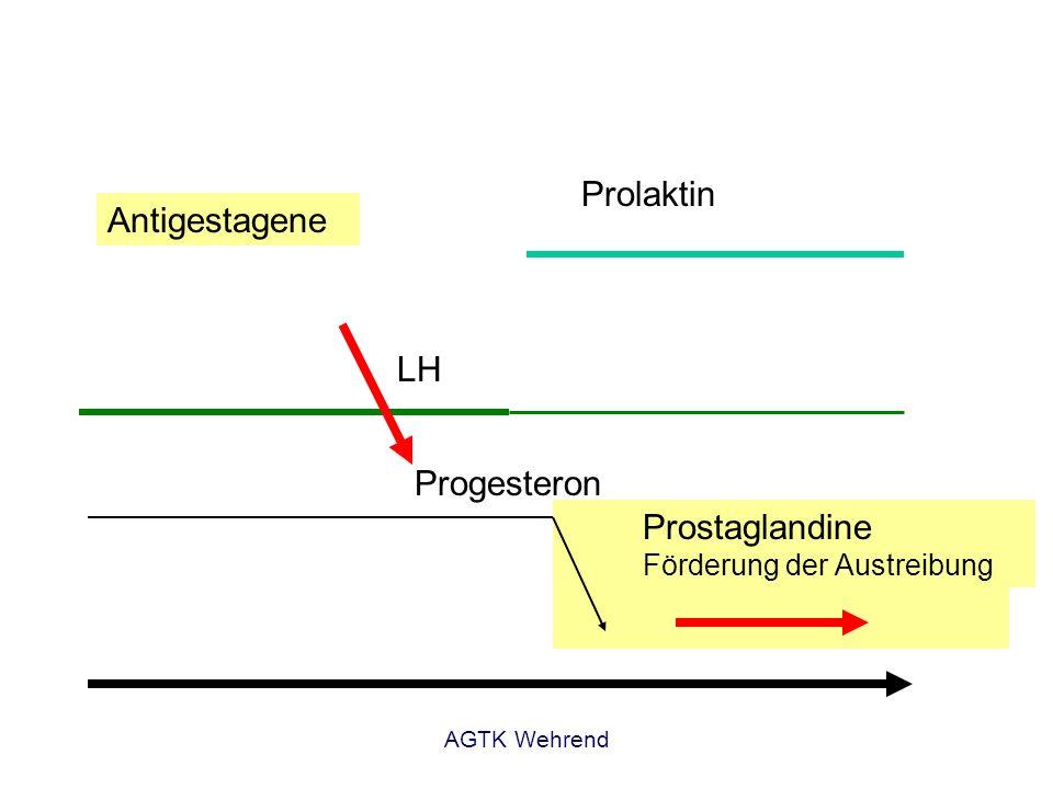 AGTK Wehrend Progesteron LH Prolaktin Antigestagene Prostaglandine Förderung der Austreibung