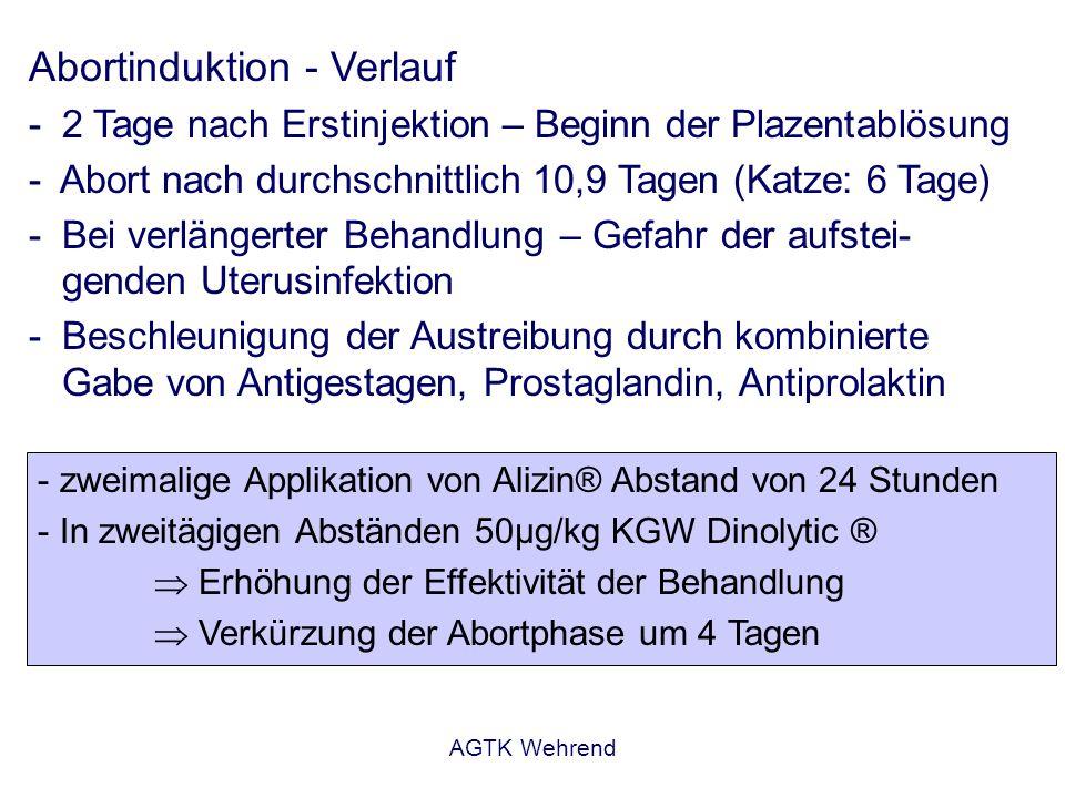 AGTK Wehrend Abortinduktion - Verlauf - 2 Tage nach Erstinjektion – Beginn der Plazentablösung - Abort nach durchschnittlich 10,9 Tagen (Katze: 6 Tage