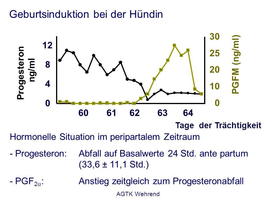 AGTK Wehrend Geburtsinduktion bei der Hündin Hormonelle Situation im peripartalem Zeitraum - Progesteron:Abfall auf Basalwerte 24 Std. ante partum (33