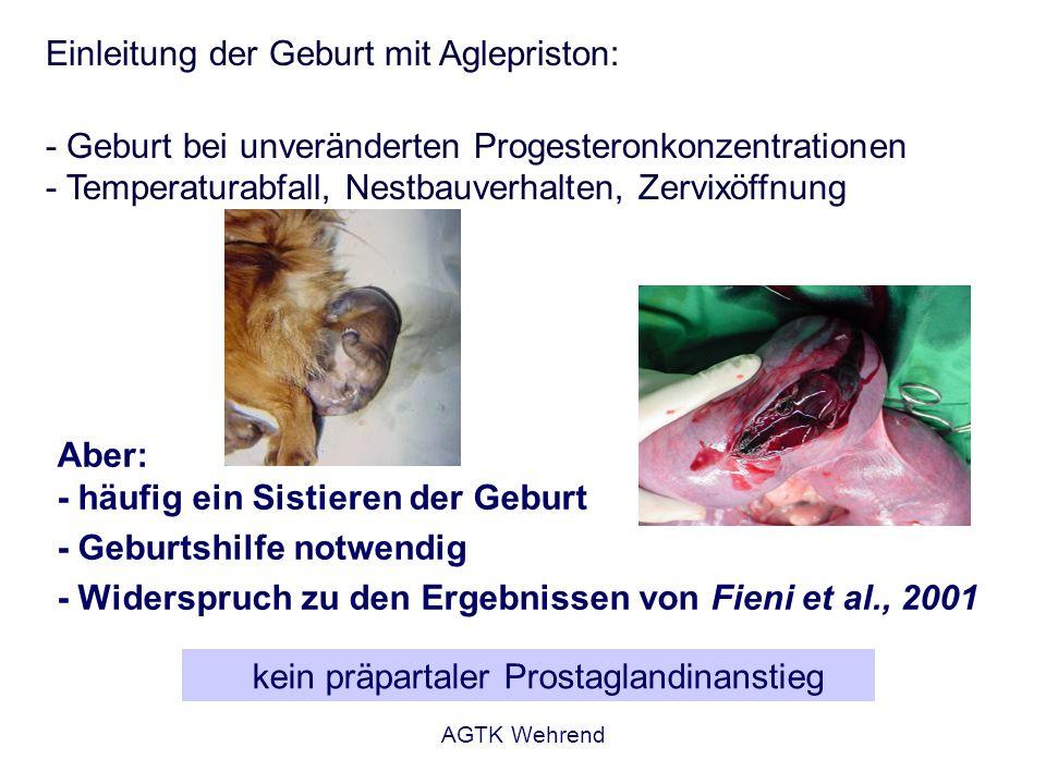 AGTK Wehrend Einleitung der Geburt mit Aglepriston: - Geburt bei unveränderten Progesteronkonzentrationen - Temperaturabfall, Nestbauverhalten, Zervix