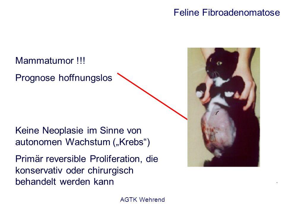 AGTK Wehrend Feline Fibroadenomatose Mammatumor !!! Prognose hoffnungslos Keine Neoplasie im Sinne von autonomen Wachstum (Krebs) Primär reversible Pr