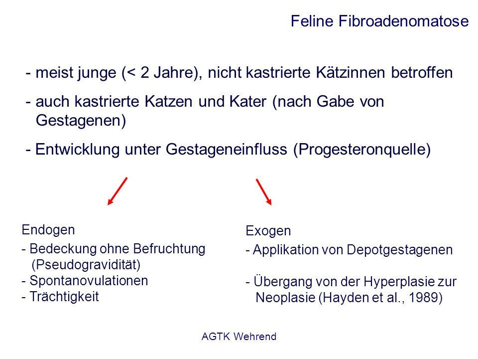 AGTK Wehrend Feline Fibroadenomatose - meist junge (< 2 Jahre), nicht kastrierte Kätzinnen betroffen - auch kastrierte Katzen und Kater (nach Gabe von