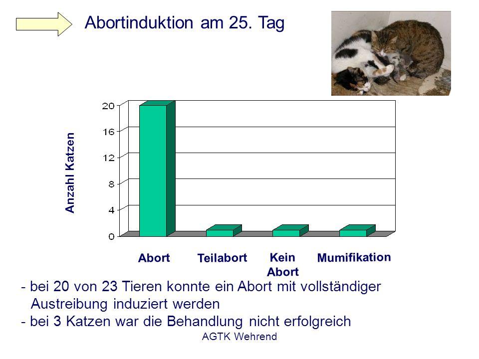 AGTK Wehrend - bei 20 von 23 Tieren konnte ein Abort mit vollständiger Austreibung induziert werden - bei 3 Katzen war die Behandlung nicht erfolgreic