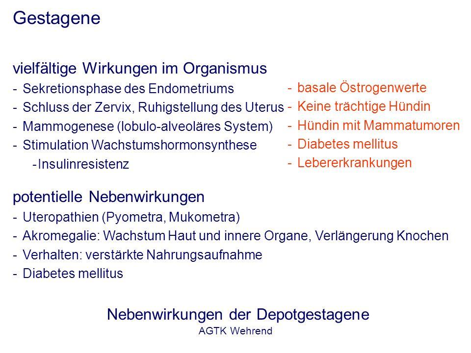 AGTK Wehrend Gestagene vielfältige Wirkungen im Organismus -Sekretionsphase des Endometriums -Schluss der Zervix, Ruhigstellung des Uterus -Mammogenes