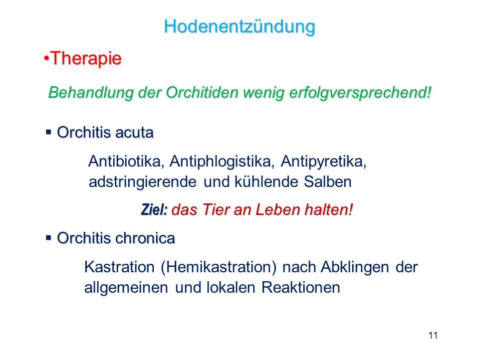 11 Hodenentzündung TherapieTherapie Behandlung der Orchitiden wenig erfolgversprechend! Orchitis acuta Orchitis acuta Antibiotika, Antiphlogistika, An