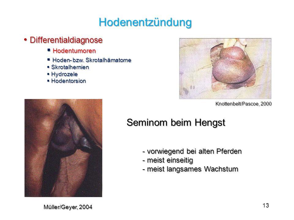 13 Hodenentzündung Hodenentzündung Differentialdiagnose Differentialdiagnose Hodentumoren Hodentumoren Hoden- bzw. Skrotalhämatome Hoden- bzw. Skrotal