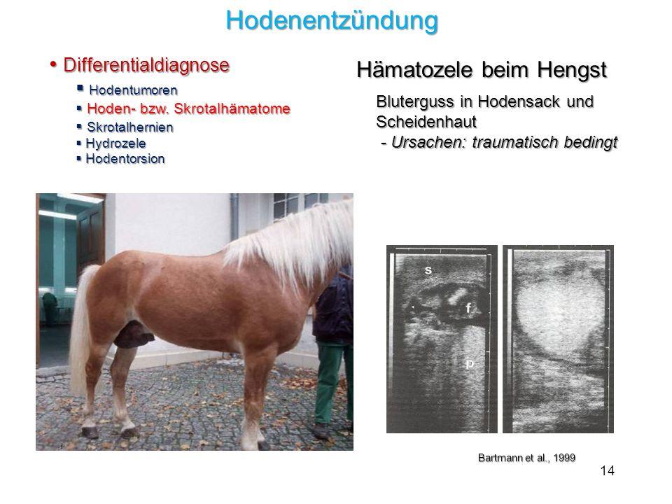 14 Hodenentzündung Hodenentzündung Differentialdiagnose Differentialdiagnose Hodentumoren Hodentumoren Hoden- bzw. Skrotalhämatome Hoden- bzw. Skrotal