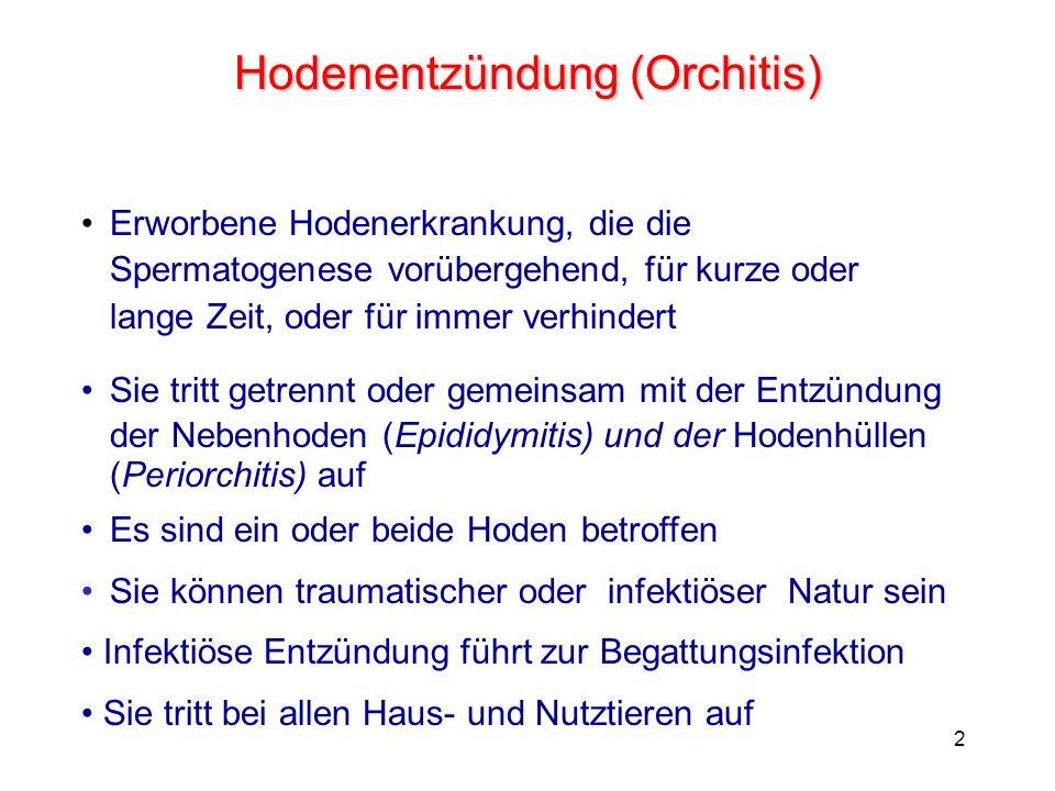2 Hodenentzündung (Orchitis) Erworbene Hodenerkrankung, die die Spermatogenese vorübergehend, für kurze oder lange Zeit, oder für immer verhindert Sie tritt getrennt oder gemeinsam mit der Entzündung der Nebenhoden (Epididymitis) und der Hodenhüllen (Periorchitis) auf Es sind ein oder beide Hoden betroffen Sie können traumatischer oder infektiöser Natur sein Infektiöse Entzündung führt zur Begattungsinfektion Sie tritt bei allen Haus- und Nutztieren auf