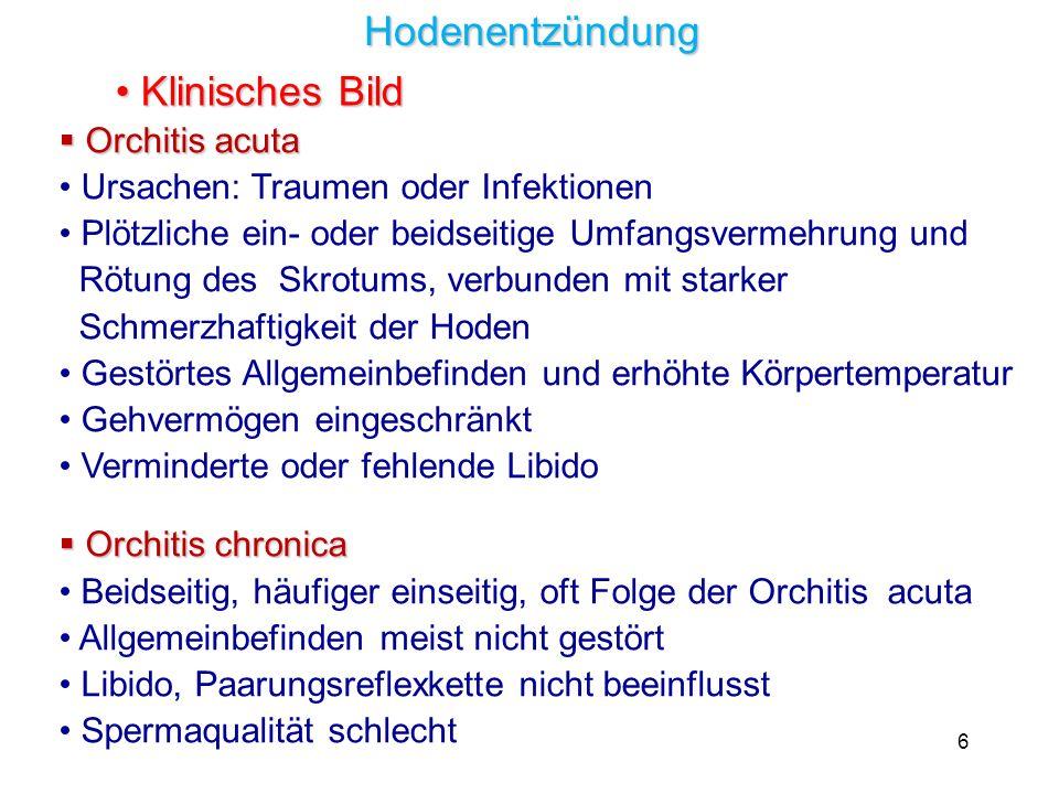 17 Suspensorium mit Eiswürfeln Anstrich mit abkühlender Salbe Zustand von Präputium und Hoden bei der Klinikentlassung