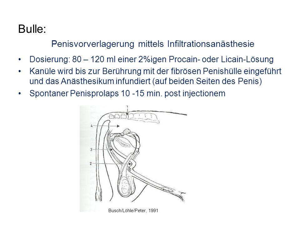 Bulle: Penisvorverlagerung mittels Infiltrationsanästhesie Dosierung: 80 – 120 ml einer 2%igen Procain- oder Licain-Lösung Kanüle wird bis zur Berühru