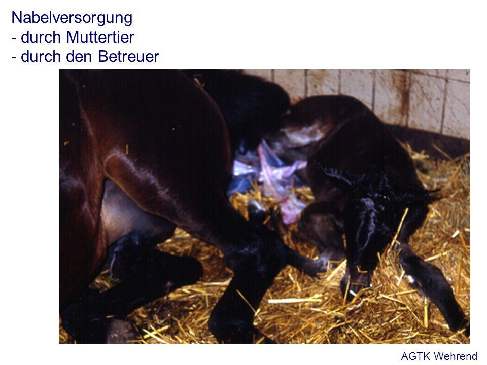 Nabelversorgung - durch Muttertier - durch den Betreuer AGTK Wehrend