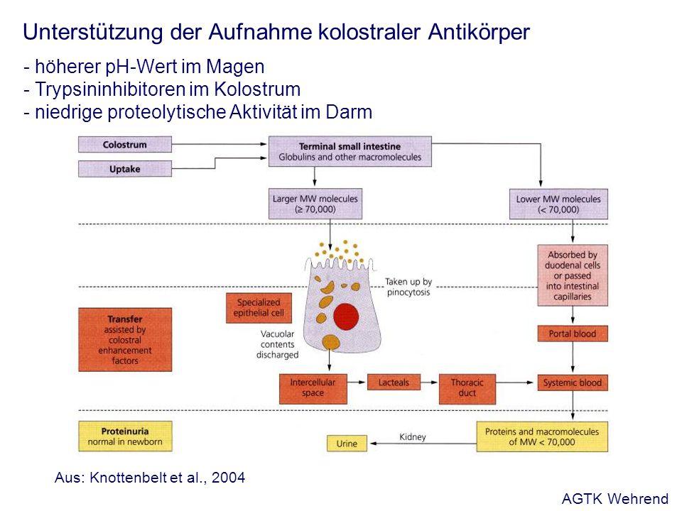 Unterstützung der Aufnahme kolostraler Antikörper - höherer pH-Wert im Magen - Trypsininhibitoren im Kolostrum - niedrige proteolytische Aktivität im Darm Aus: Knottenbelt et al., 2004 AGTK Wehrend