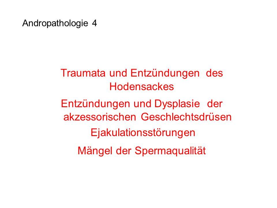 Andropathologie 4 Traumata und Entzündungen des Hodensackes Entzündungen und Dysplasie der akzessorischen Geschlechtsdrüsen Ejakulationsstörungen Mäng