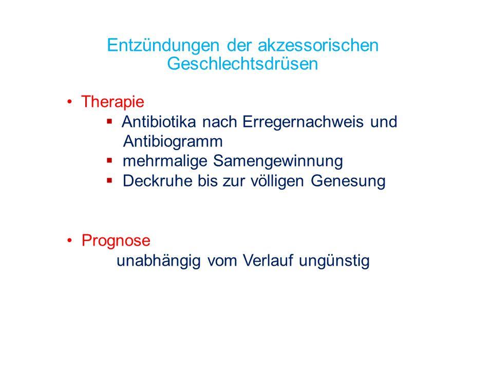 Entzündungen der akzessorischen Geschlechtsdrüsen Therapie Antibiotika nach Erregernachweis und Antibiogramm mehrmalige Samengewinnung Deckruhe bis zu