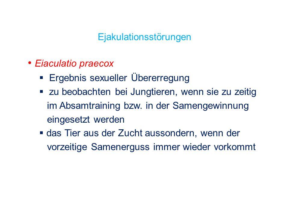 Eiaculatio praecox Ergebnis sexueller Übererregung zu beobachten bei Jungtieren, wenn sie zu zeitig im Absamtraining bzw. in der Samengewinnung einges