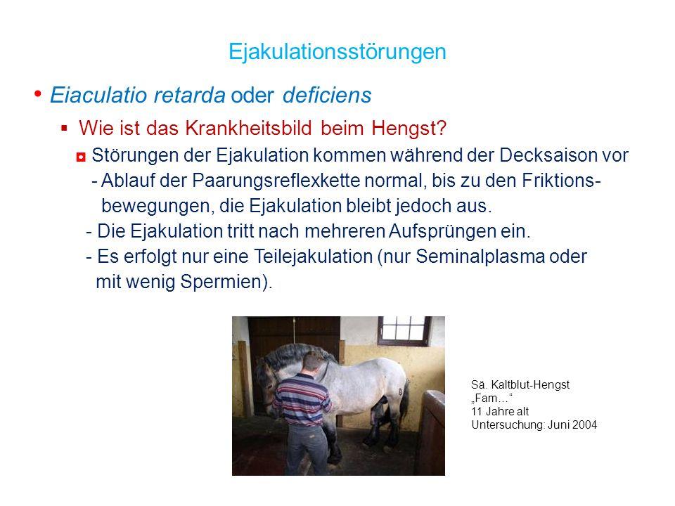 Eiaculatio retarda oder deficiens Wie ist das Krankheitsbild beim Hengst? Störungen der Ejakulation kommen während der Decksaison vor - Ablauf der Paa