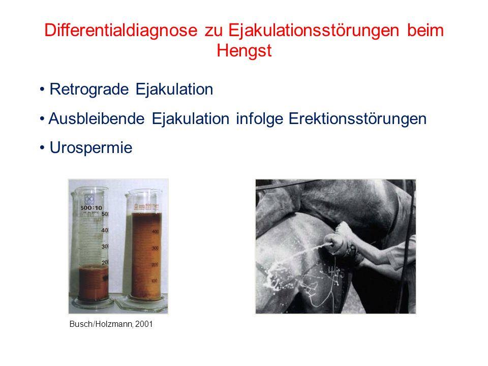 Differentialdiagnose zu Ejakulationsstörungen beim Hengst Retrograde Ejakulation Ausbleibende Ejakulation infolge Erektionsstörungen Urospermie Busch/