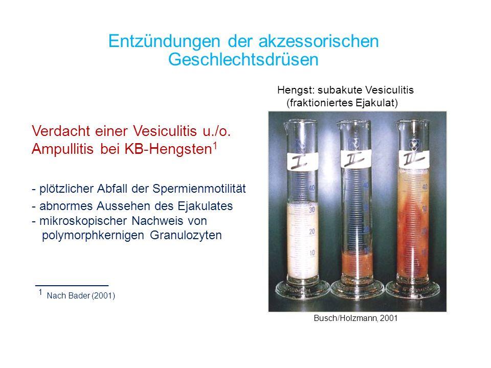 Entzündungen der akzessorischen Geschlechtsdrüsen Busch/Holzmann, 2001 Hengst: subakute Vesiculitis (fraktioniertes Ejakulat) Verdacht einer Vesiculit