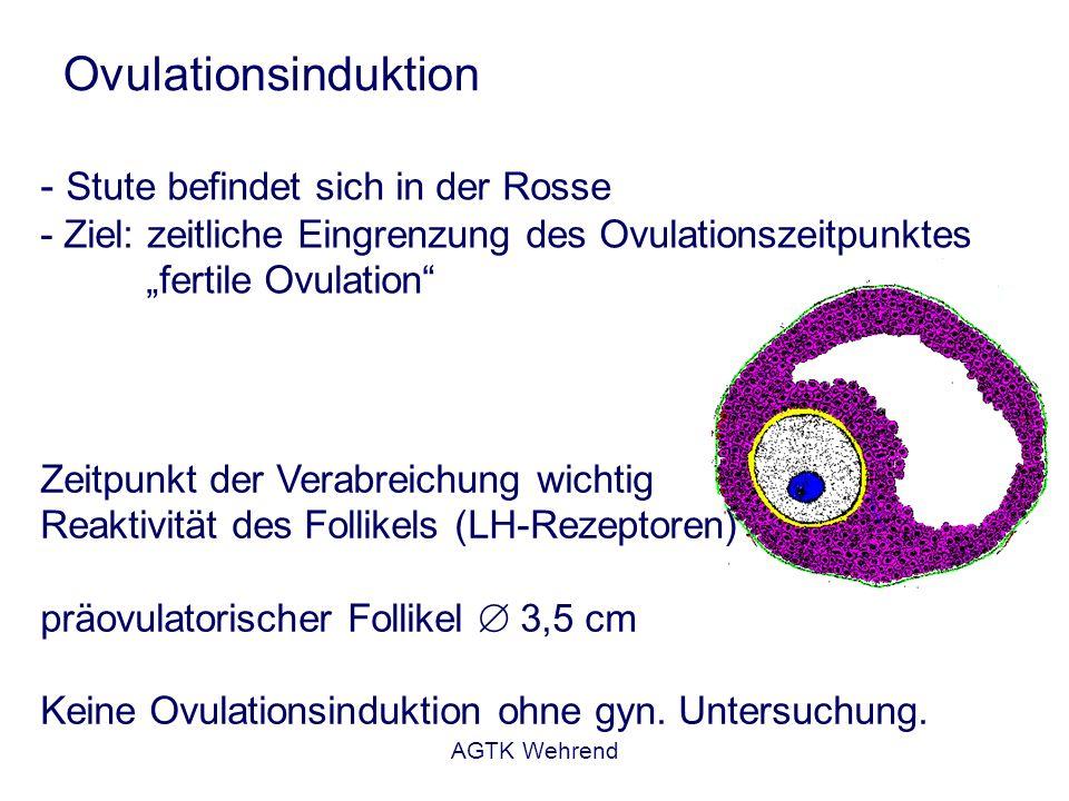AGTK Wehrend Zyklusverkürzung Durchführung: - Dosierung streng präparatespezifisch - natürliche und synthetische Analoga Anmerkungen: - unerwünschte Arzneimittelwirkungen im therapeutischen Bereich - Kreislauf (HF), Darmmotorik, Schwitzen, erhöhte Atemfrequenz - bei i.m.-Verabreichung Gefahr von Anaerobierinfektionen Fruchtbarkeit im Folgezyklus: - abhängig vom Ovarzustand zum Behandlungszeitpunkt