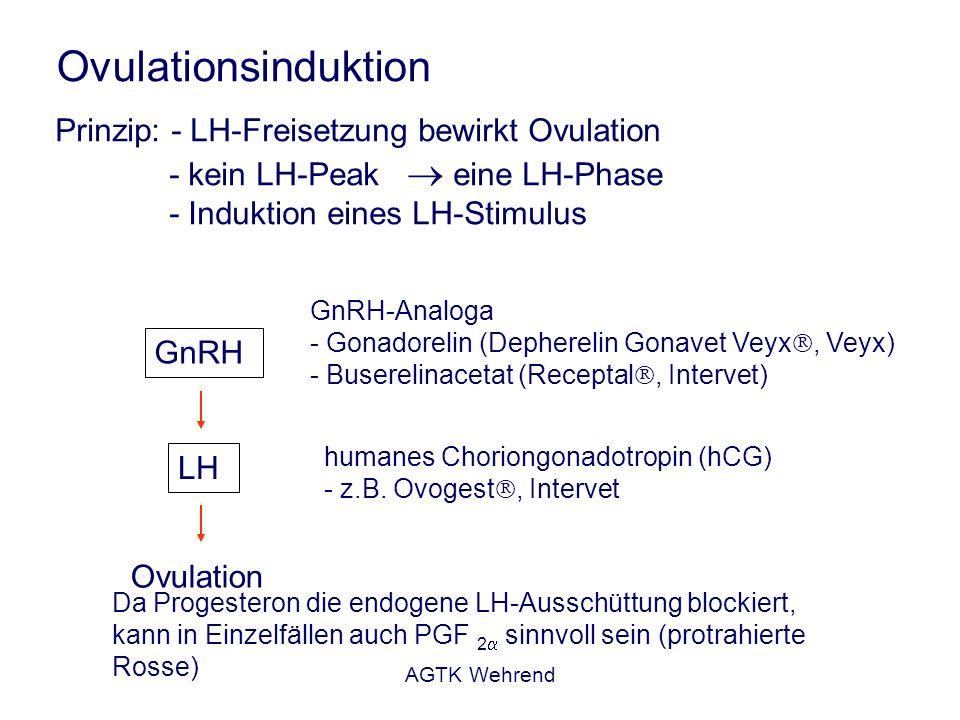 AGTK Wehrend Ovulationsinduktion Prinzip: - LH-Freisetzung bewirkt Ovulation - kein LH-Peak eine LH-Phase - Induktion eines LH-Stimulus GnRH LH Ovulation GnRH-Analoga - Gonadorelin (Depherelin Gonavet Veyx, Veyx) - Buserelinacetat (Receptal, Intervet) humanes Choriongonadotropin (hCG) - z.B.