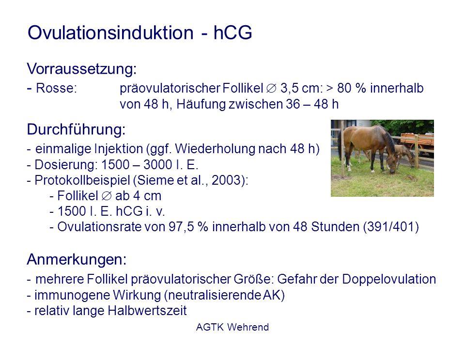 AGTK Wehrend Ovulationsinduktion - hCG Vorraussetzung: - Rosse: präovulatorischer Follikel 3,5 cm: > 80 % innerhalb von 48 h, Häufung zwischen 36 – 48 h Durchführung: - einmalige Injektion (ggf.