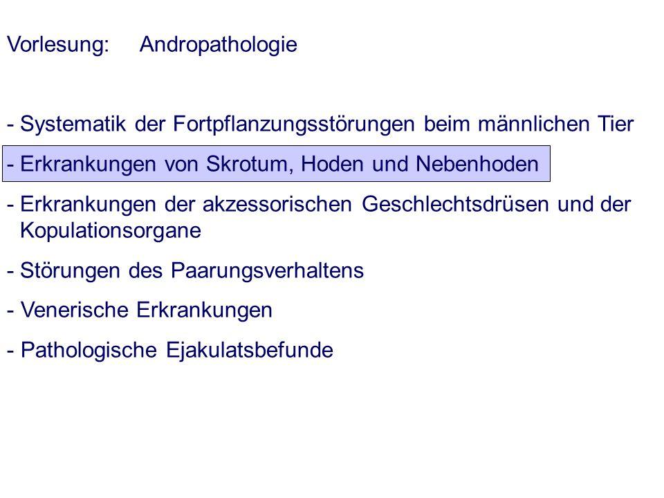 Vorlesung: Andropathologie - Systematik der Fortpflanzungsstörungen beim männlichen Tier - Erkrankungen von Skrotum, Hoden und Nebenhoden - Erkrankung